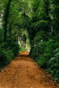Routinen sind wie Wege durch den Wald